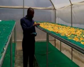 Enhancing climate resilience and nutrition uptake through the fortification of corn floor locally produced high nutrition value crops( mango)